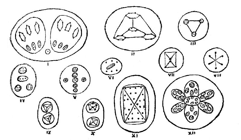 Types of Proto-Elemental Matter
